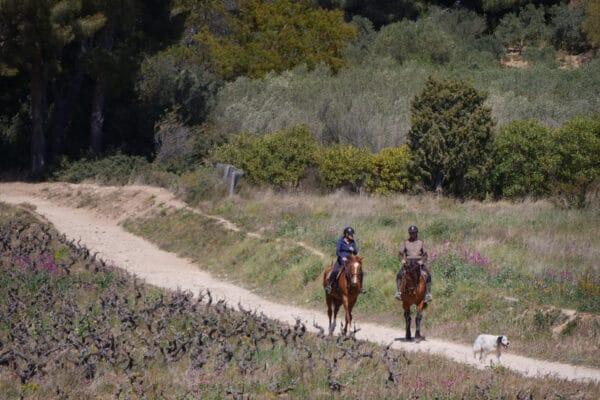 Sentier des vignes-15