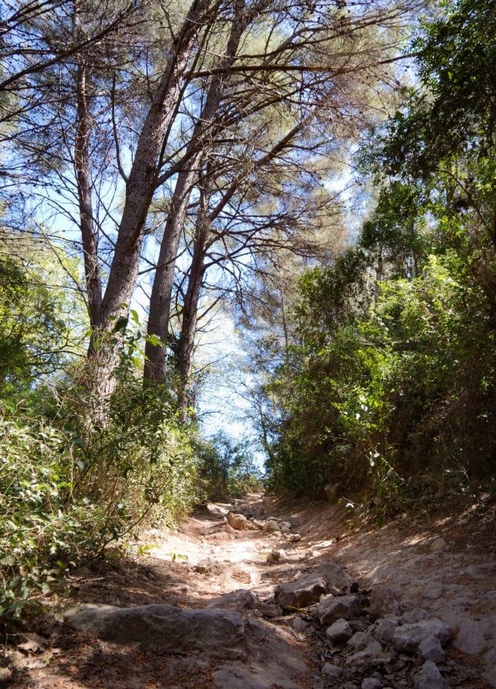 Sentier des vignes-3