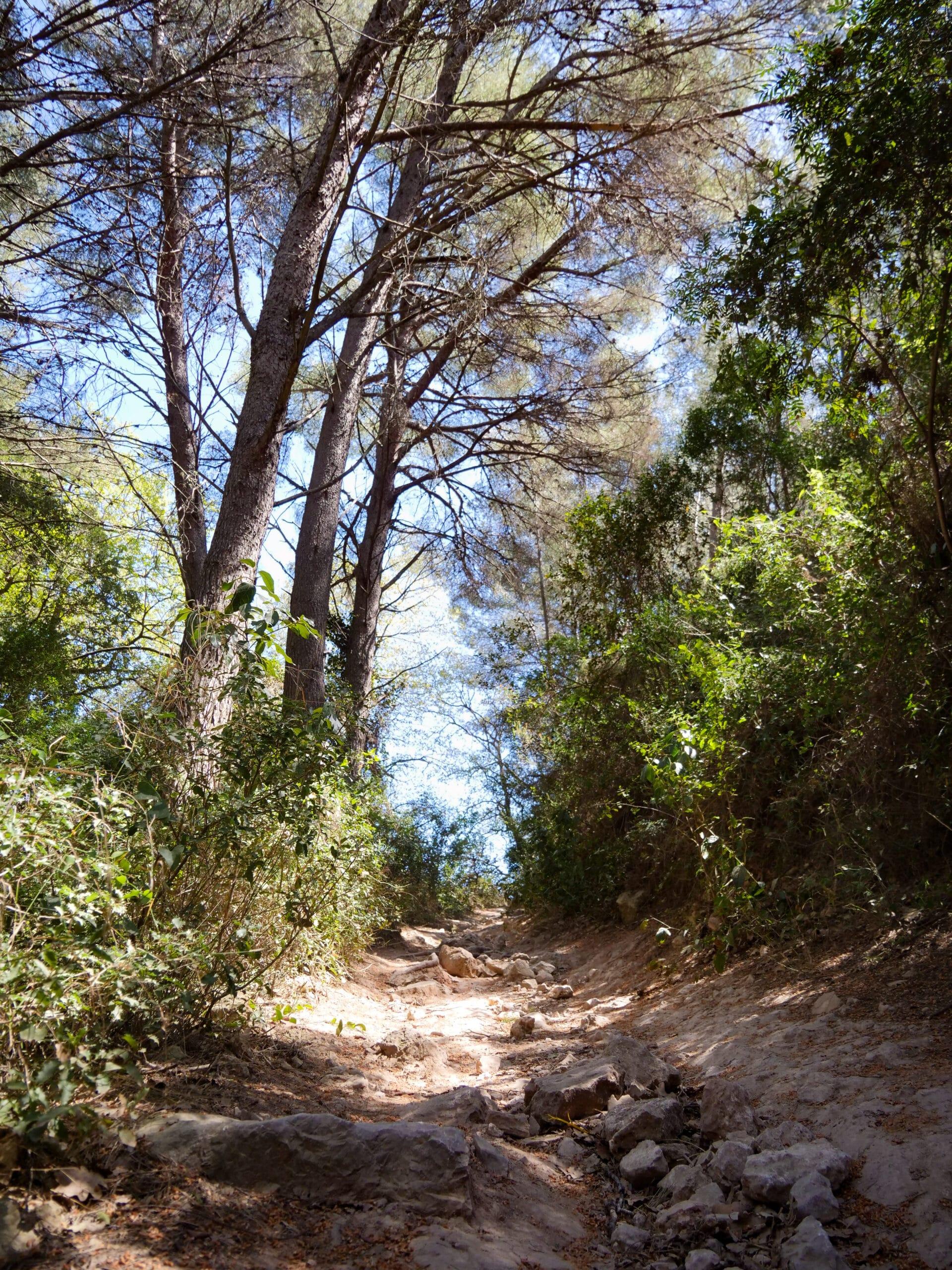 Un sentier de Provence, les pieds dans l'eau