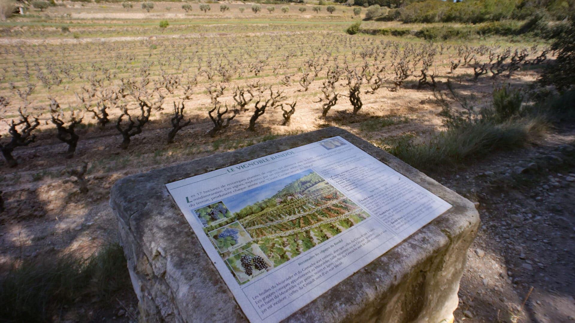 Sentier des vignes-6