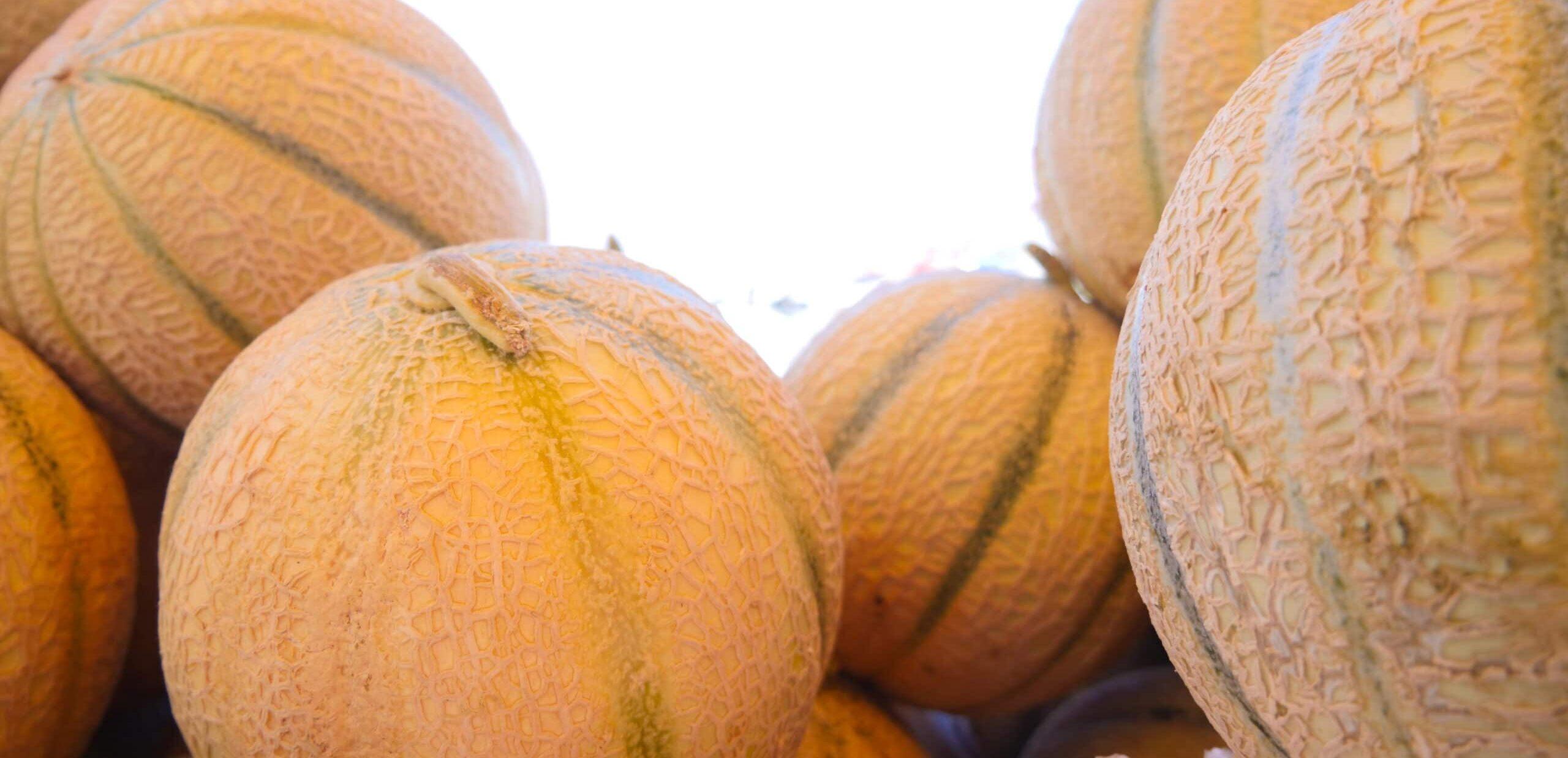 Melons sur le marché de la Madrague